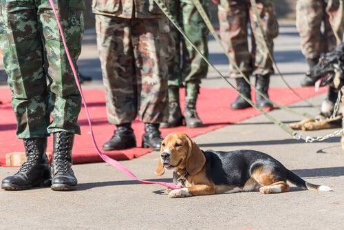 un chien sauveteur pendant une parade militaire