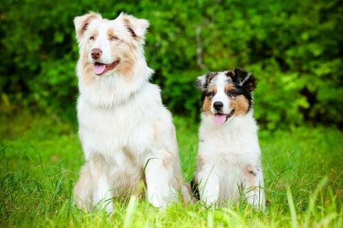 deux chiens assis dans l'herbe
