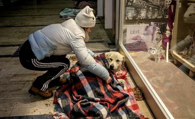 une femme pose une couverture sur un chien allongé parterre
