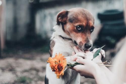 un chien effrayé à côté d'une femme qui tient une fleur