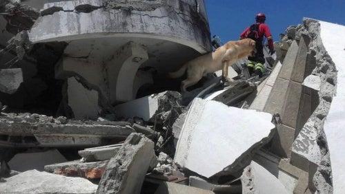 Les chiens sauveteurs en Équateur: un grand soutien