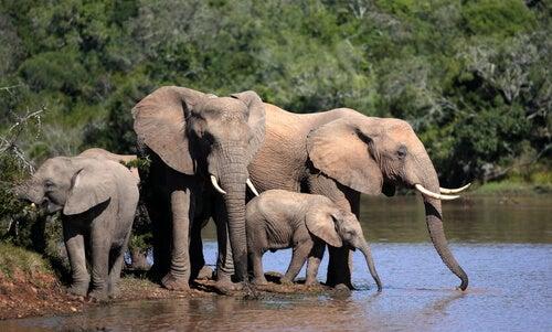 un groupe d'éléphants autour d'un étang