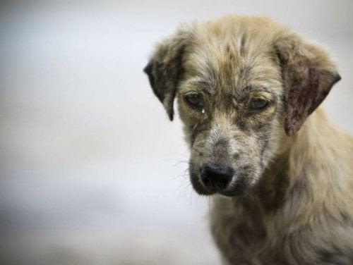 un chien regarde dans le vide et a l'air triste