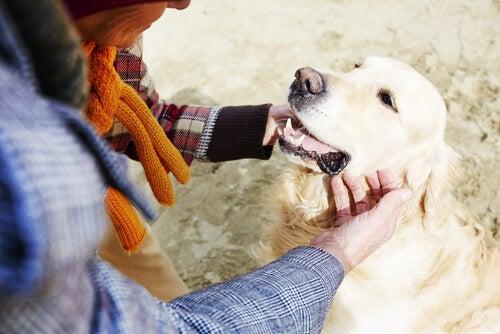 un chien cajolé par une femme