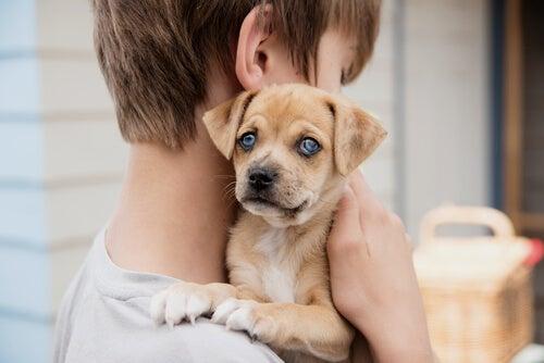 Un chiot aux yeux bleus dans les bras d'un petit garçon