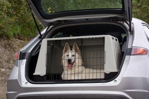 un chien dan une cage dans une voiture