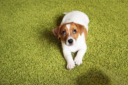 Faites attention au ton de votre voix lorsque vous parlez à votre chien