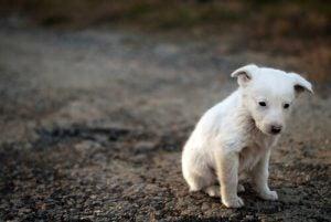 le refuge pour les chiens de Gaza