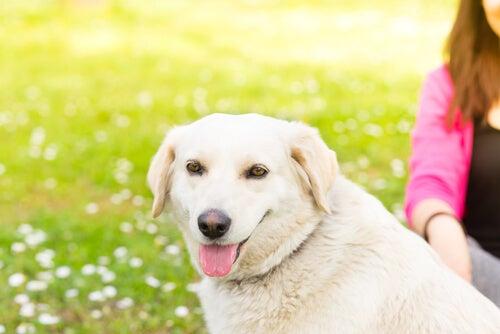 5 choses que votre chien n'aime pas