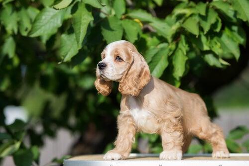 7 races de chiens que vous allez adorer