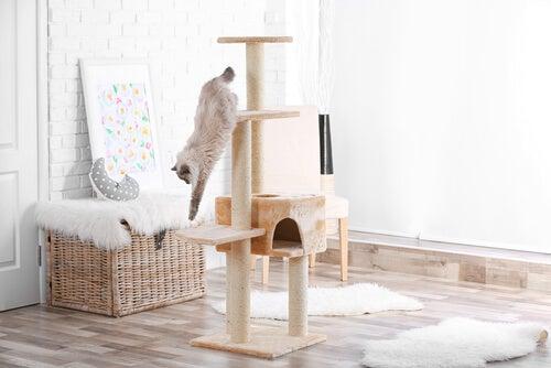 un chat descend d'un grand arbre à chat