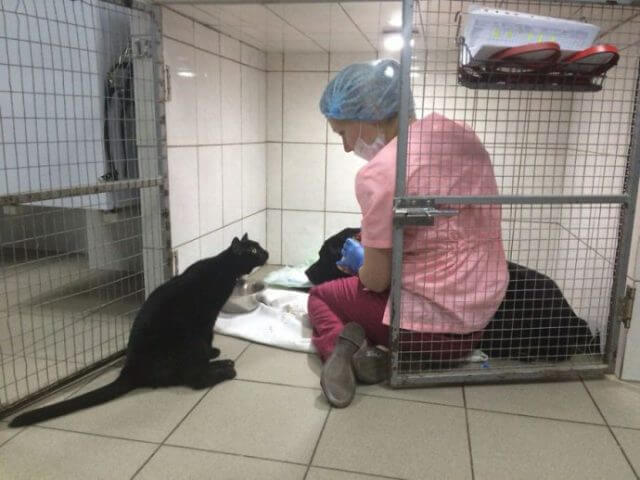 Lucifer aux côté d'une femme qui s'occupe d'un chien