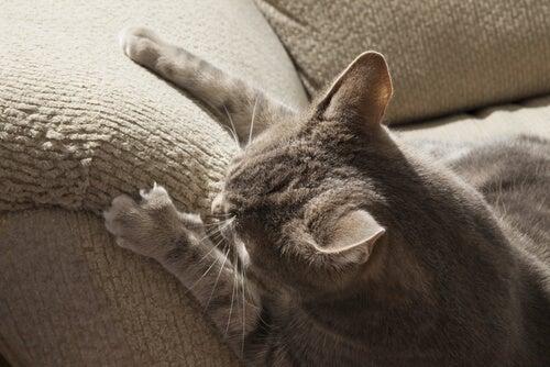 Comment empêcher votre chat de faire ses griffes dans toute la maison?