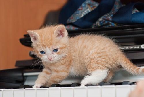 un chaton roux sur un piano