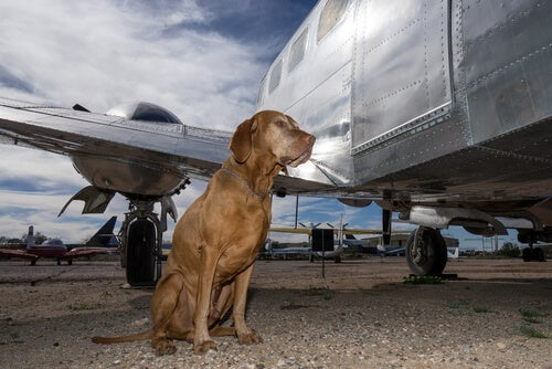 Prendre l'avion avec son chien : ce qu'il faut savoir sur le trajet en soute
