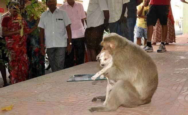 le singe avec le petit chien dans ses bras