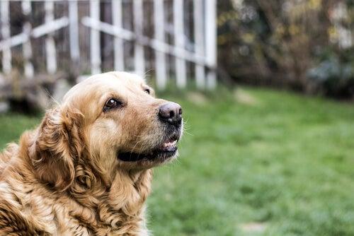 Les principaux soins à fournir à un chien âgé