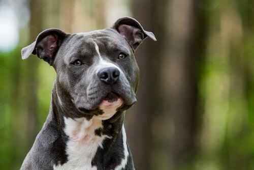 Les races de chiens qui requièrent peu de soins