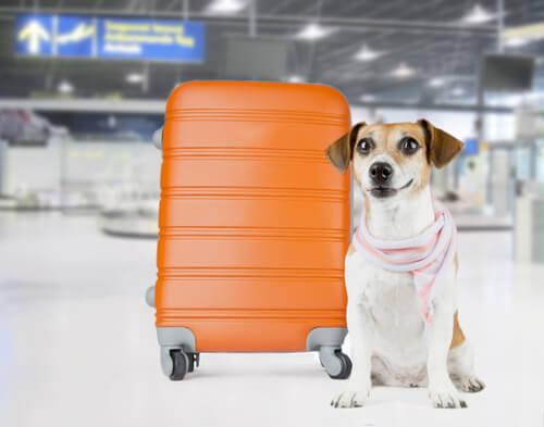 un chien à côté d'une valise dans un aéroport