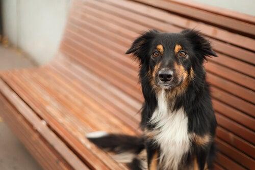 La castration est-elle bonne pour votre animal?
