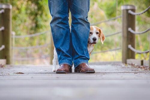 un chien apeuré ce cache derrière un homme