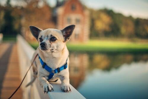 un chien allongé près d'un étang