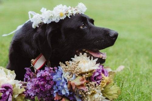 Un chien atteint d'une tumeur cérébrale meurt après le mariage de son propriétaire