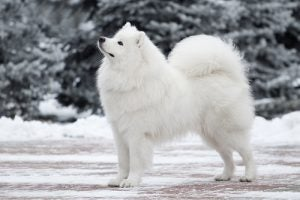 Un chien blanc dans la neige
