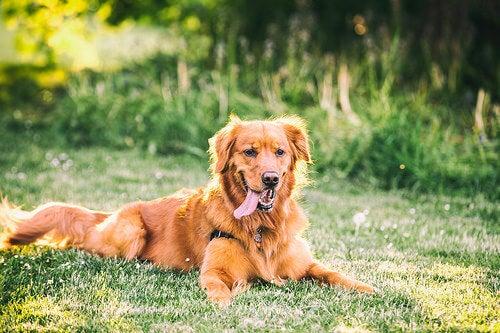 chien assis dans l'herbe