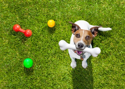 un chien avec un os en plastique