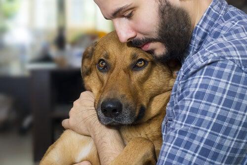 un homme tient un chien dans ses bras