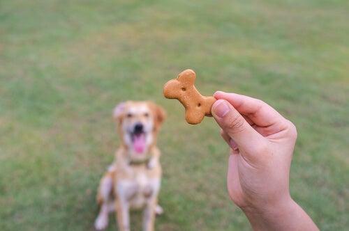 une main qui tient un biscuit avec un chien assis en arrière-plan