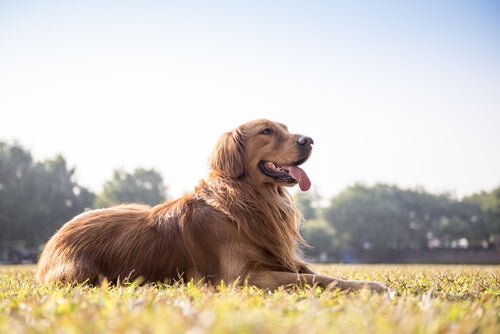 Comment déterminer si votre chien est en bonne santé à partir de ses selles?