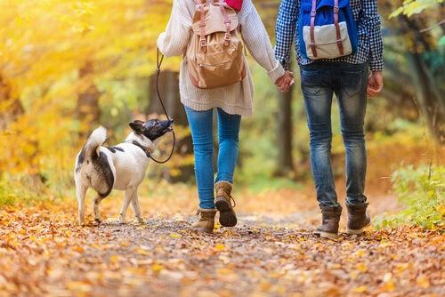 Un couple promène un chien dans la forêt