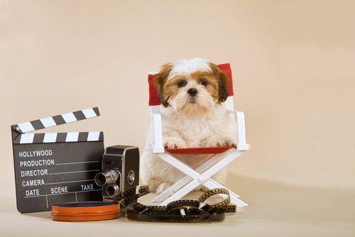 Petit chien assis sur une chaise directeur de film à sa taille, avec du matériel cinématographique à côté.