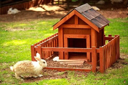 Un lapin s'approche d'une grande cabane en bois, à l'extérieur