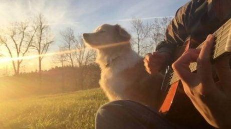 un chien dehors assis à coté d'un homme qui joue de la guitare