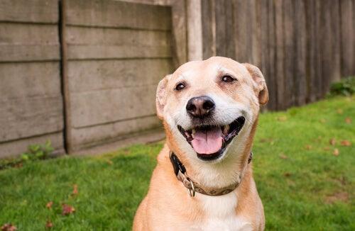 un chien qui a l'air heureux