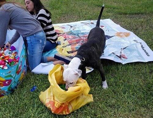 un chien renifle un sac de recyclage