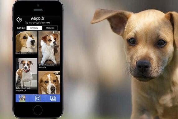 une photo de l'application adopt us à côté d'un chiot