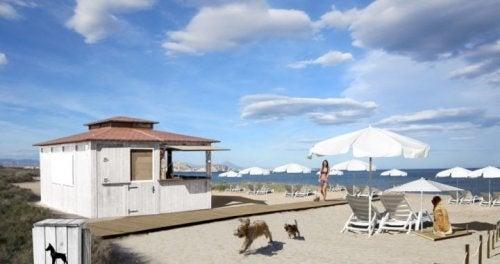 chiens qui s'amusent à la plage