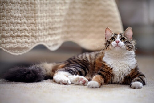 Tous nos conseils si vous avez un chat à la maison