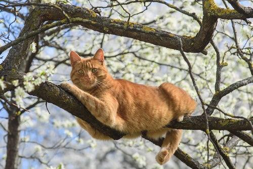 un chat roux est perché dans un arbre