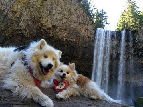 Le chien aveugle qui a un chien d'aveugle