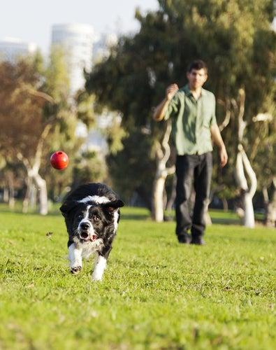 un chien court après la balle que lui a lancé son maître