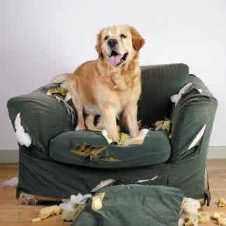Les secrets pour améliorer le comportement de votre chien
