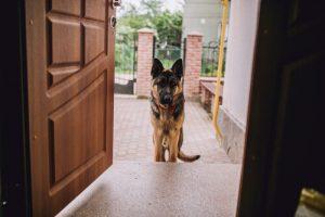 Certains chiens voient des portes invisibles