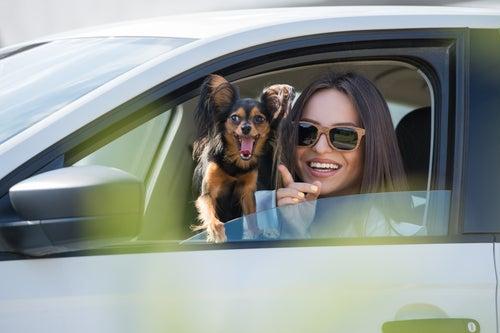 Comment éviter que votre animal soit malade en voiture