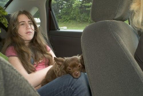 une jeune fille assise à l'arrière d'une voiture tient un petit chien sur ses genoux