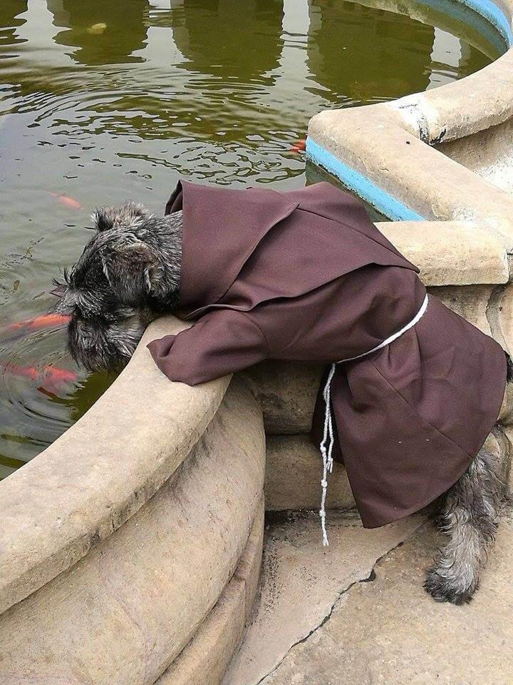 chien habillé en moine qui boit dans une pièce d'eau